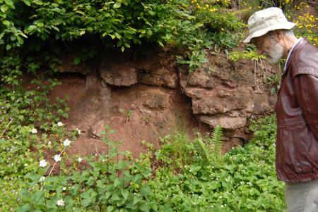 Discordance palatine à Niedersteinbach