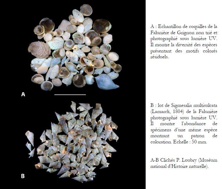 MollusquesGrignon